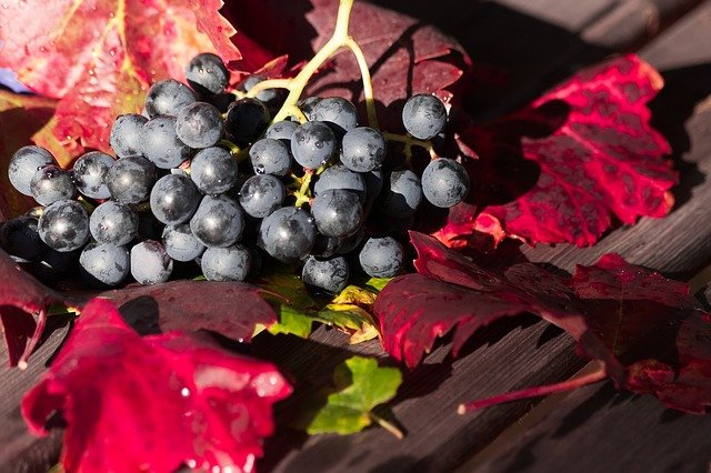 vins-pessac-leognan-cepage-pessac-leognan-malbec-raisin