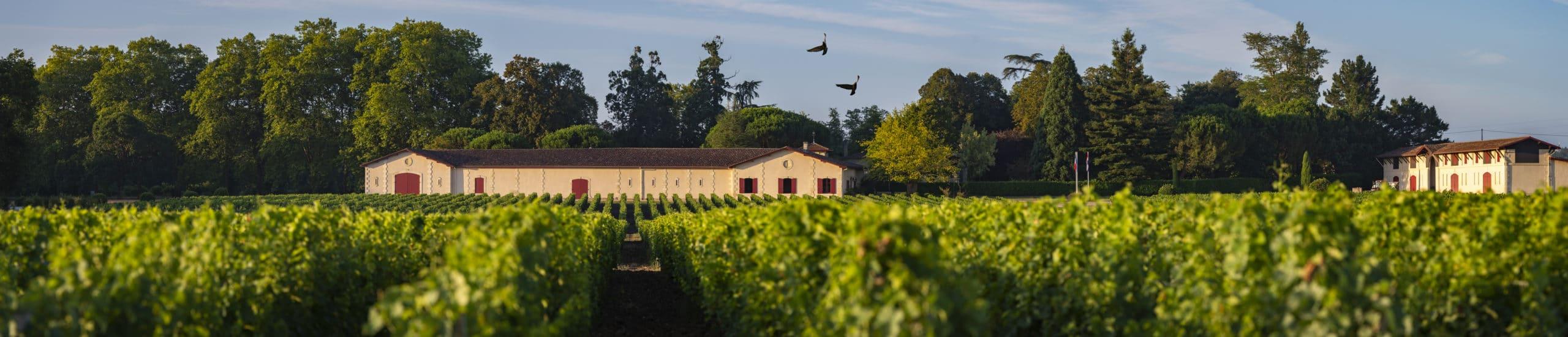 vins-pessac-leognan-l-apprenti-sommelier-chateau-brown-visite-panorama-batiments-batiment