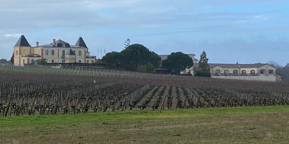 vins-pessac-leognan-l-apprenti-sommelier-château-de-france-vignes-chateau-de-france-domaine