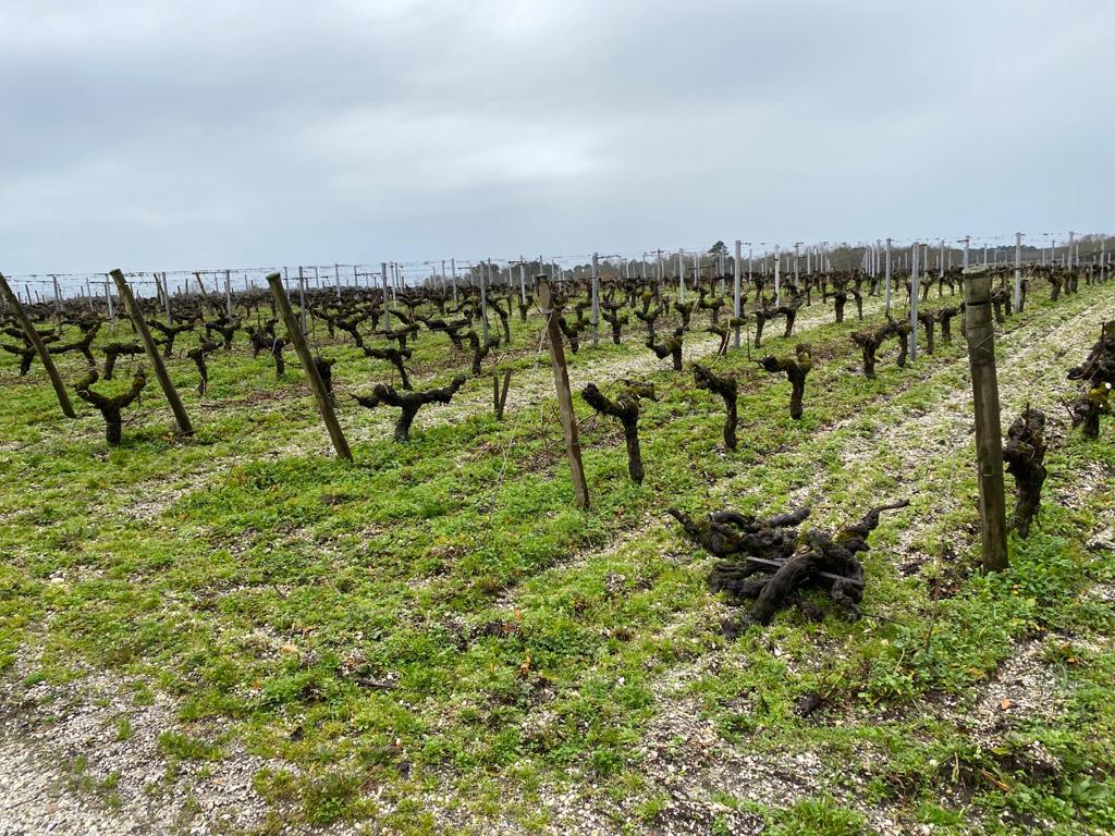 vins-pessac-leognan-l-apprenti-sommelier-chateau-de-france-vignes-vigne-raisin-raisins-4
