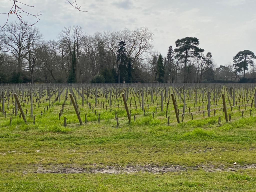 vins-pessac-leognan-l-apprenti-sommelier-chateau-haut-bergey-visite-vignes-vignoble